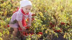 Tutkimus – torjunta-aineiden kertyminen elimistöön lapsilla vähenee luomuruokaa suosimalla