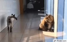 That sneaky slide - Find and Share funny animated gifs - Katzen - Cats Happy Animals, Cute Funny Animals, Funny Animal Pictures, Funny Cute, Animals And Pets, Cute Cats, Haha, Cat Tags, Gatos Cats