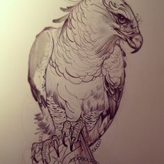 .@greggletron | Harpy eagle, protecting the knowledge