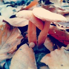 #zunaj ni pomlad, jesen je