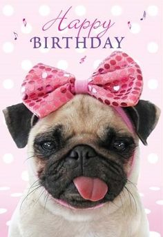 Birthday Pug Wishes Funny Happy Images Pictures
