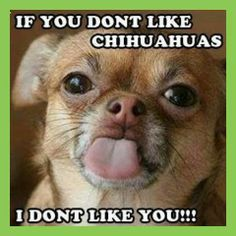Now that I have a chihuahua and he's won my heart 100% I can agree with this hehe in fact I should put it on a t-shirt lol