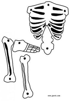 skeleton-source_nsu