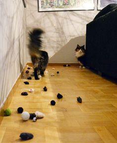 15 flagrantes de gatos acumuladores que vão fazer você morrer de rir!!! - CAT CLUB