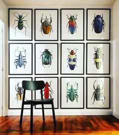 "379 Likes, 9 Comments - Photographer Göran Liljeberg (@liljebergs) on Instagram: ""Wow look at our beetles at @octobiarritz """