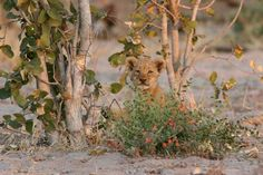 Animals, Zimbabwe, Country, Ruins, National Forest, Animales, Animaux, Animal, Animais