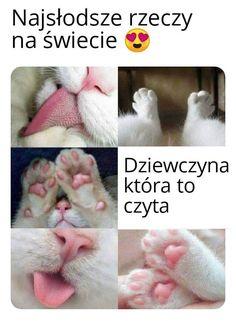 Cat Memes, Funny Memes, Polish Memes, Clap Clap, Happy Photos, Cute Love, Cute Wallpapers, Cute Cats, Funny Animals