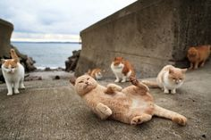 On Japan's Tashirojima Island, cats are king