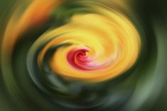 Abstract Poster featuring the photograph Abstract From Hibiscus by Cynthia Guinn