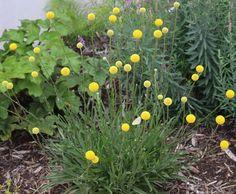 Green Rooms, Flower Beds, Four Seasons, Botany, Garden Plants, Planting Flowers, Exterior, Gardening, Kitchen