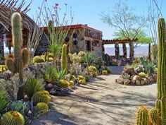 Desert Landscaping Garden Ideas Desert Gardening and Landscaping – Adding Beauty to The Home Garden Desert Garden Landscaping Ideas. Desert gardening is a great idea for all sorts of landscap… Succulent Landscaping, Landscaping With Rocks, Succulents Garden, Backyard Landscaping, Landscaping Ideas, High Desert Landscaping, Desert Backyard, Arizona Gardening, Desert Gardening