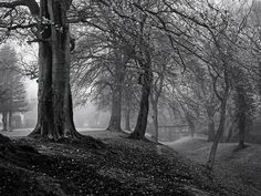 The house at the end of the woods (b/w)