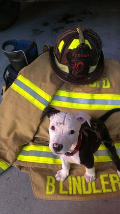 As Jake gradually recovered from his burns, he soon became a beloved fixture down at Linder's work, the Hanahan Fire Department. | This Puppy Was Rescued From A Fire And Now Works As A Firefighter - BuzzFeed News