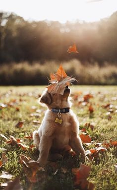 Golden Retriever Puppies A Hound Dog — Happy November! Animals And Pets, Baby Animals, Funny Animals, Cute Animals, Cute Puppies, Cute Dogs, Dogs And Puppies, Doggies, Retriever Puppy