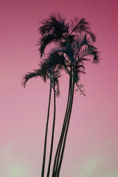 Pink palm trees.