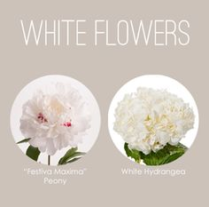 So Memorial Day has come and gone and those who strictly follow dress etiquette know that means it's now okay to wear WHITE! So, we thought it would be fun to continue our flower color series by s...
