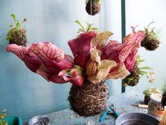 Fedor Van der Valks creation, yarn encased rootballs