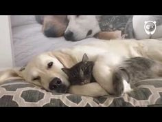 These #Napping Fur Babies Are Giving Us Serious #Snuggle Goals http://ibeebz.com