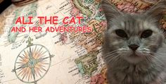 Ali The Cat and Her Adventures Chapter 1 | Storytelling for Children