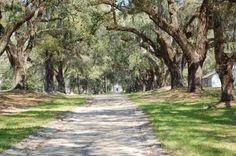 Avenue of Oaks- SC Lowcountry