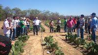 Taís Paranhos: Cultivo de plantas forrageiras