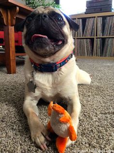 Something about this very small dog toy makes Liam smile.