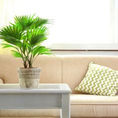 インテリアにオススメな観葉植物のまとめ