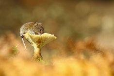 25 photos adorables dans l'intimité des souris sauvages
