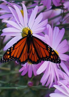 Who doesn't love a butterfly on a perfect flower.