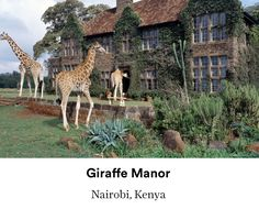 Hotel with giraffes and you eat breakfast and giraffes poke their heads through and eat with you. There are also warthogs, bushbuck,dik dik, and 180 birds. Visit the giraffe sanctuary nearby. Elephant lodge and adopt baby elephant. Meet the resident warthog. Closed in may.