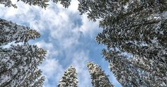 Trees form friendships and remember their experiences : TreeHugger