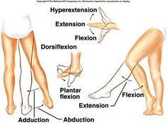 Examples Of Joint Movements | 11. Name the three general types of movementsallowed by joints.