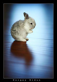 ...and carrots please.  Hermoso ♥ en extremo.  @comotuguayaba