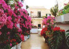 14 best Terrazze Fiorite -Photo images on Pinterest | Balconies ...