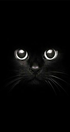 #cat#wallpaper Animals, Cute Cats, Scary, Images Of Landscapes, Stationery Shop, Animales, Beautiful Cats, Animaux, Animal