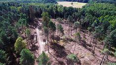 """""""Polska naruszyła prawo"""". Wyrok Trybunału Sprawiedliwości UE w sprawie Puszczy Country Roads"""