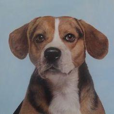 Buurhond Dogs, Animals, Animales, Animaux, Pet Dogs, Doggies, Animal, Animais