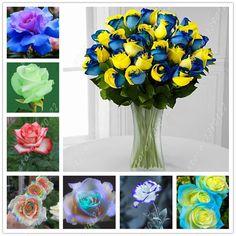 100 개/가방 장미 씨앗 장미 꽃 씨앗 드문 분재 꽃 씨앗, 24 색상 자연 성장 냄비 공장 홈 정원
