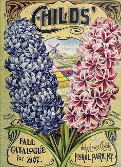 Hyacinths. John Lewis Childs, Inc. (1907)
