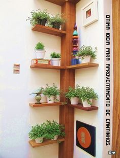 selbstgebautes Eckregal ideen pflanzen vasen baum ähnlich ähnliche Projekte un… homemade corner shelf ideas plant vases tree similar projects and ideas as presented in the picture you can find in our magazine Indoor Garden, Indoor Plants, Home And Garden, Small Balcony Garden, Tree Garden, Garden Hose, Plant Shelves, Garden Shelves, Corner Plant Shelf