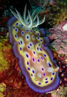The Great Sea Slug Beauty Contest « Healing Oceans Together