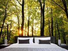 Fototapete Sonnenuntergang zwischen den Bäumen