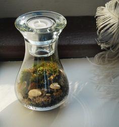 miniature terrarium with moss