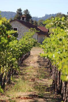 Napa Valley grape vineyard