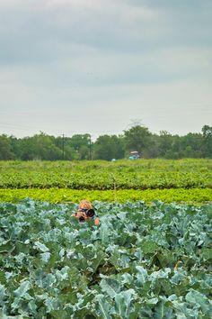 #FarmCredit #FarmCreditNational #FarmCreditBankOfTexas #IdeaShare2014 #AgTour at @Johnson Oh's Backyard Garden
