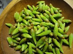 """a variety of spruce tip recipes - salt, sugar, mayo, jam, etc. If you have access to spruces, why not? Just remember to only take a few tips from each tree. This is the """"new growth"""". Leave some for the tree!"""