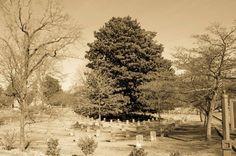 Oakland Cementery - HIKE IT FOWARD