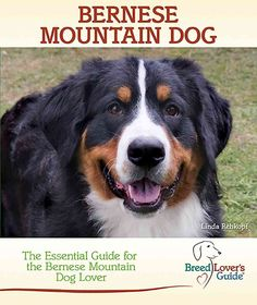 Bernese Mountain Dog: A Practical Guide for the Bernese Mountain Dog Lover