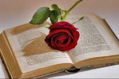 Para un buena lectura, nada mejor que una fragante rosa como separador.