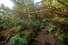 Sendero del Bosque Encantado en #Tenerife